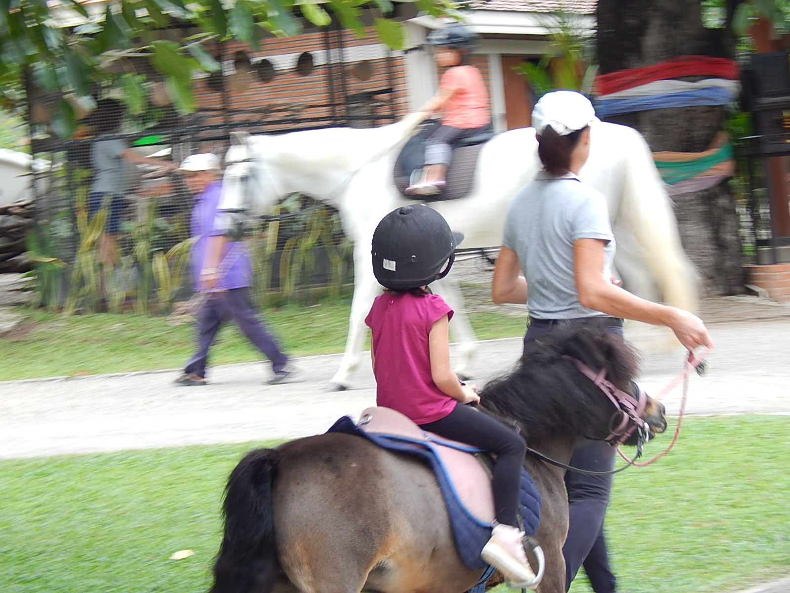 Stage poney (1)